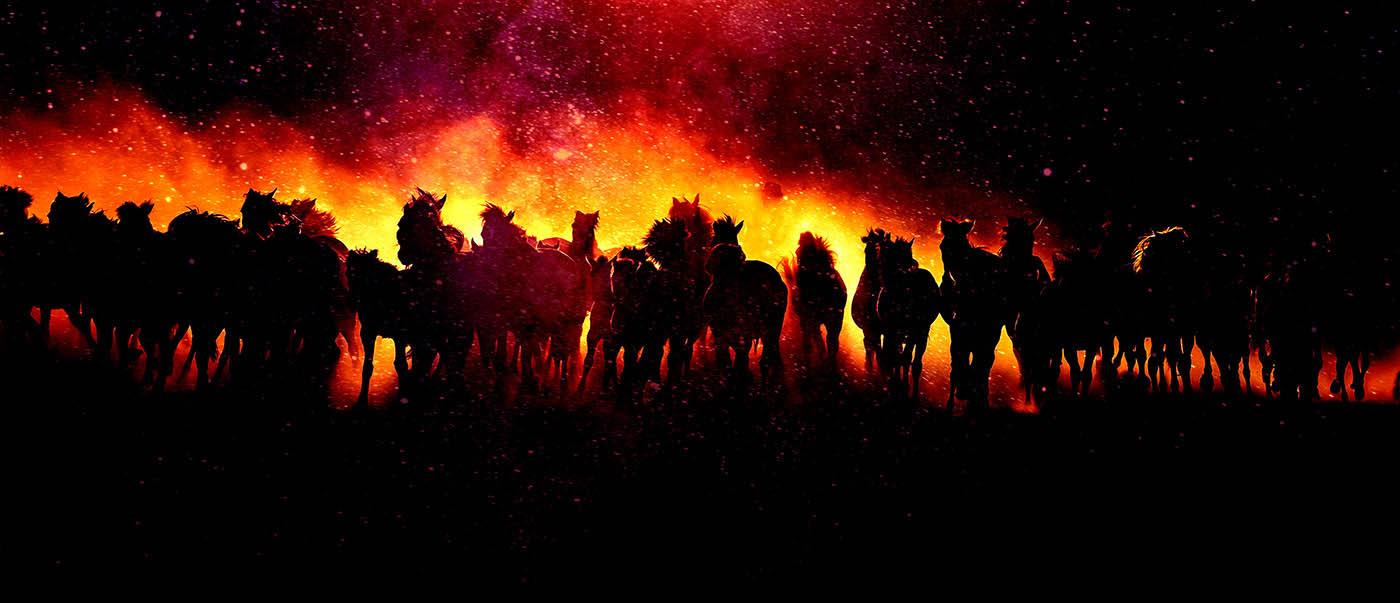 Blazing Group Of Horses Running - Stock Photo