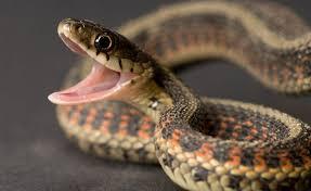 Python in Parliament