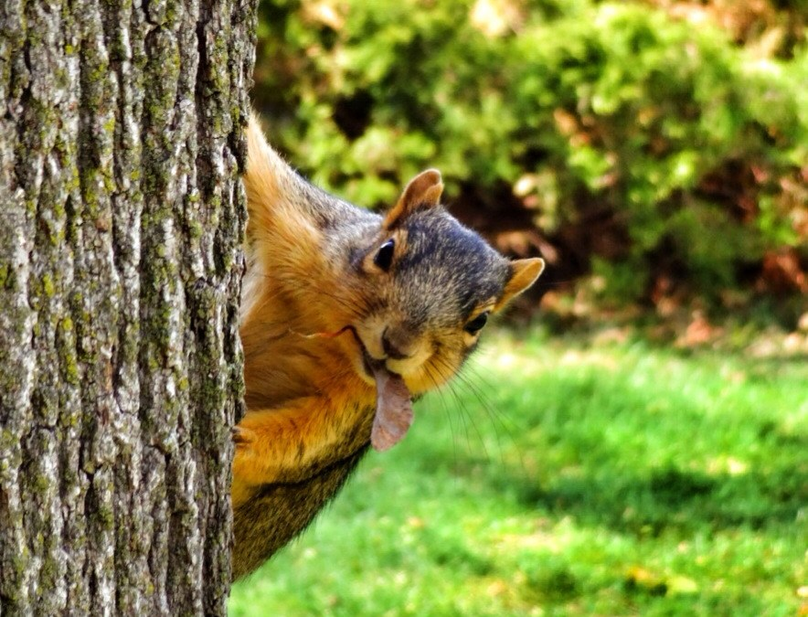 Species of Texas Squirrels and the Laws About Pest Control