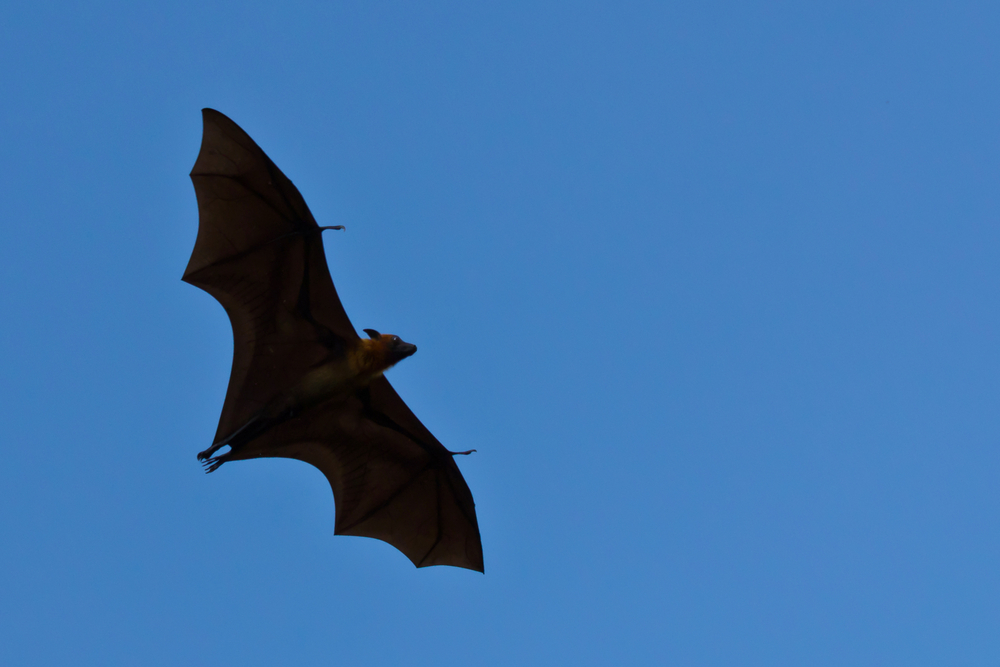 New Ways To Protect Bat Colonies