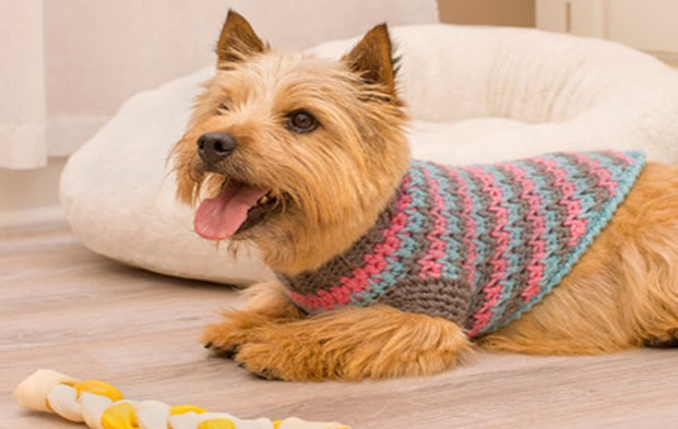 diagram crochet coaster wabco abs kabel sporty style dog sweater [free pattern]