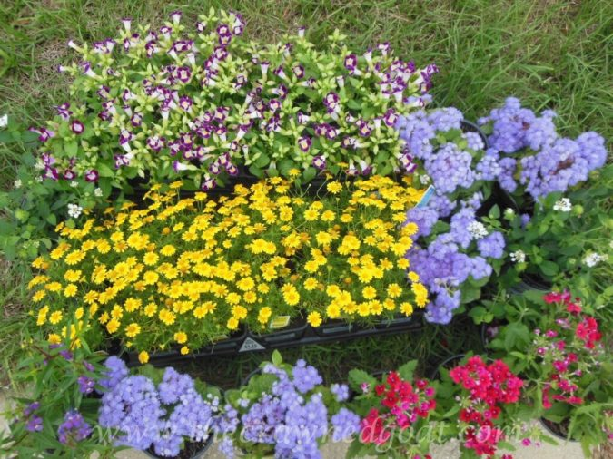 042815-2-1024x768 Wheelbarrow Container Garden DIY