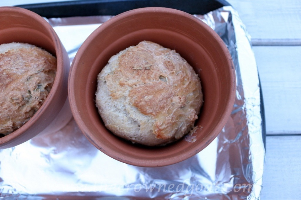 033016-1-1024x682 Flower Pot Rosemary Bread Baking