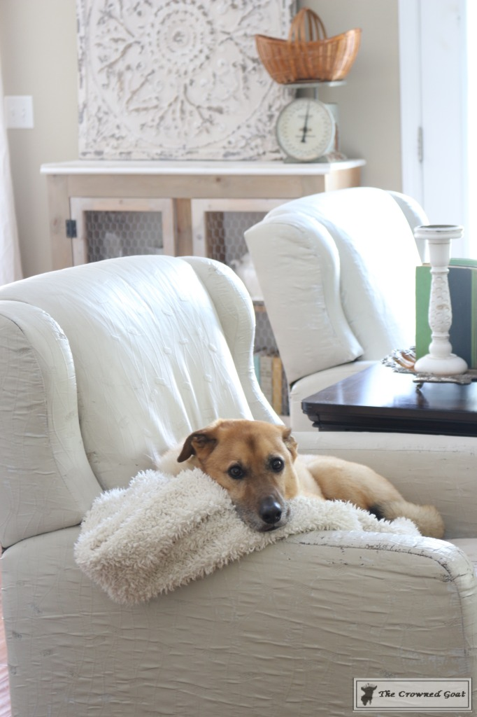 8-Tidy-Home-Tips-for-Dog-Owners-4-682x1024 8 Tidy Home Tips for Dog Owners  DIY
