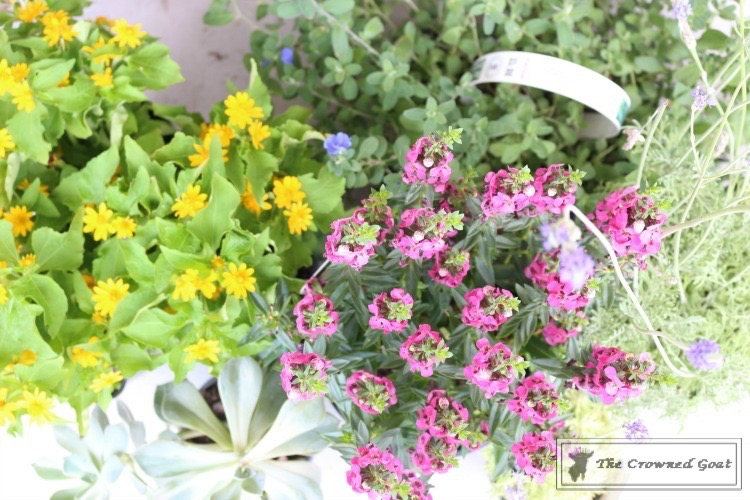 Lavender Gardener's Scrub-2