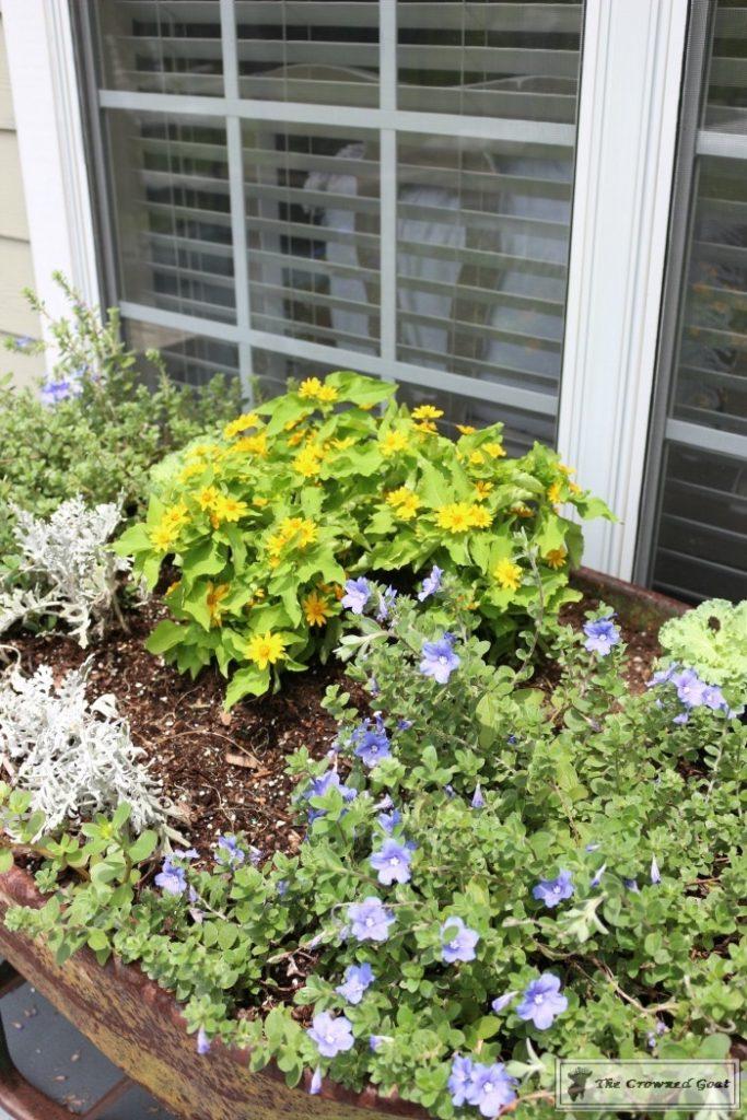 Lavender-Gardeners-Scrub-5-683x1024 Make at Home Lavender Gardener's Hand Scrub DIY Summer