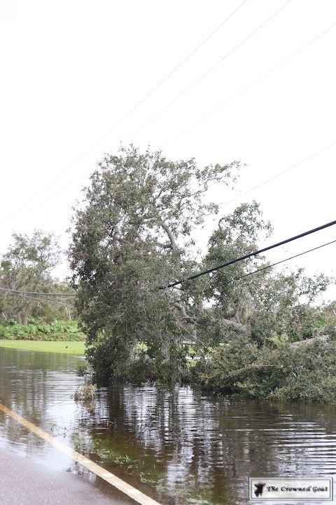 Thoughts-on-Hurricane-Irma-5-1 From the Front Porch From the Front Porch