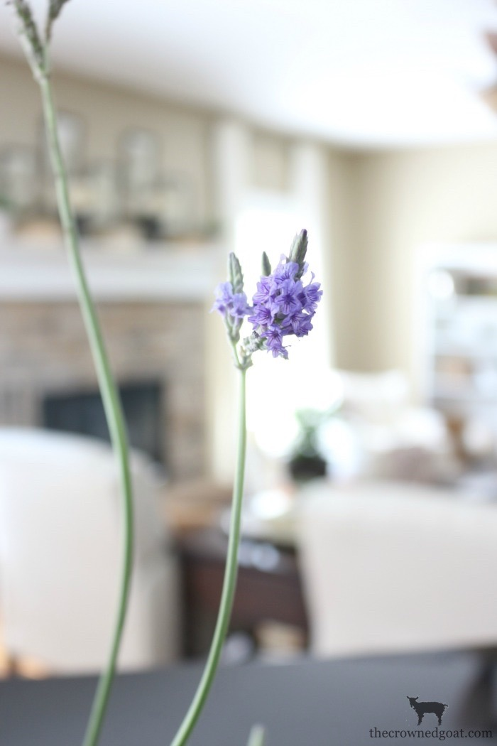 Decorating-with-House-Plants-The-Crowned-Goat-12 Decorating with Indoor Plants Back to Basic