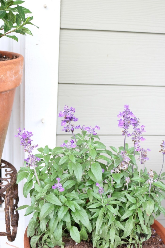 Summer-Front-Porch-Tour-The-Crowned-Goat-8 Summer Front Porch Tour Decorating DIY Summer