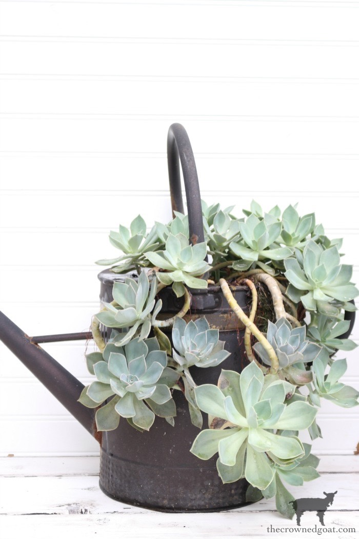 Unique-Succulent-Garden-Containers-The-Crowned-Goat-2 Don't Trash Your Old Firepit DIY Summer