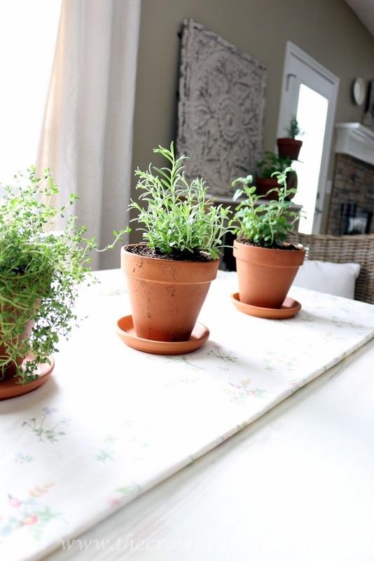 5 Tips for Growing an Indoor Herb Garden