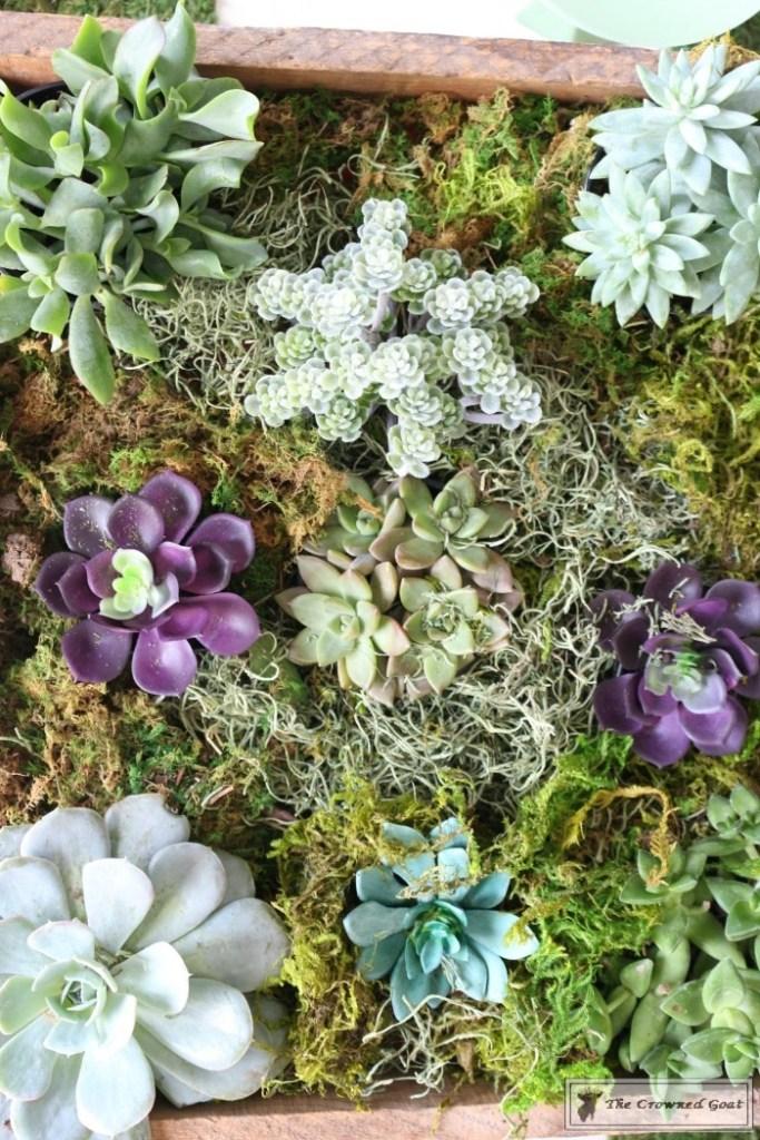 Spring Succulent Centerpiece-13