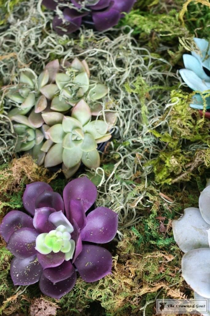 Spring Succulent Centerpiece-9