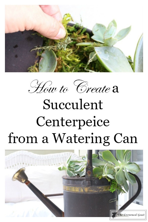 How to Create a Watering Can Succulent Centerpiece-3