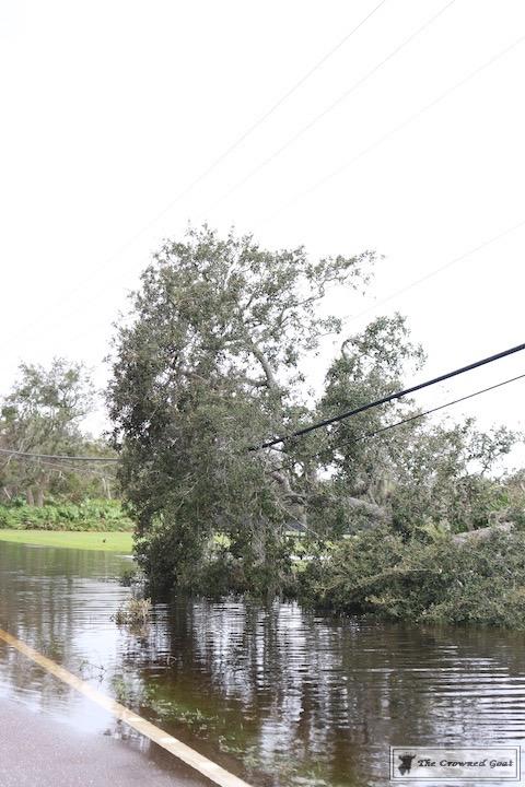 Thoughts on Hurricane Irma-11