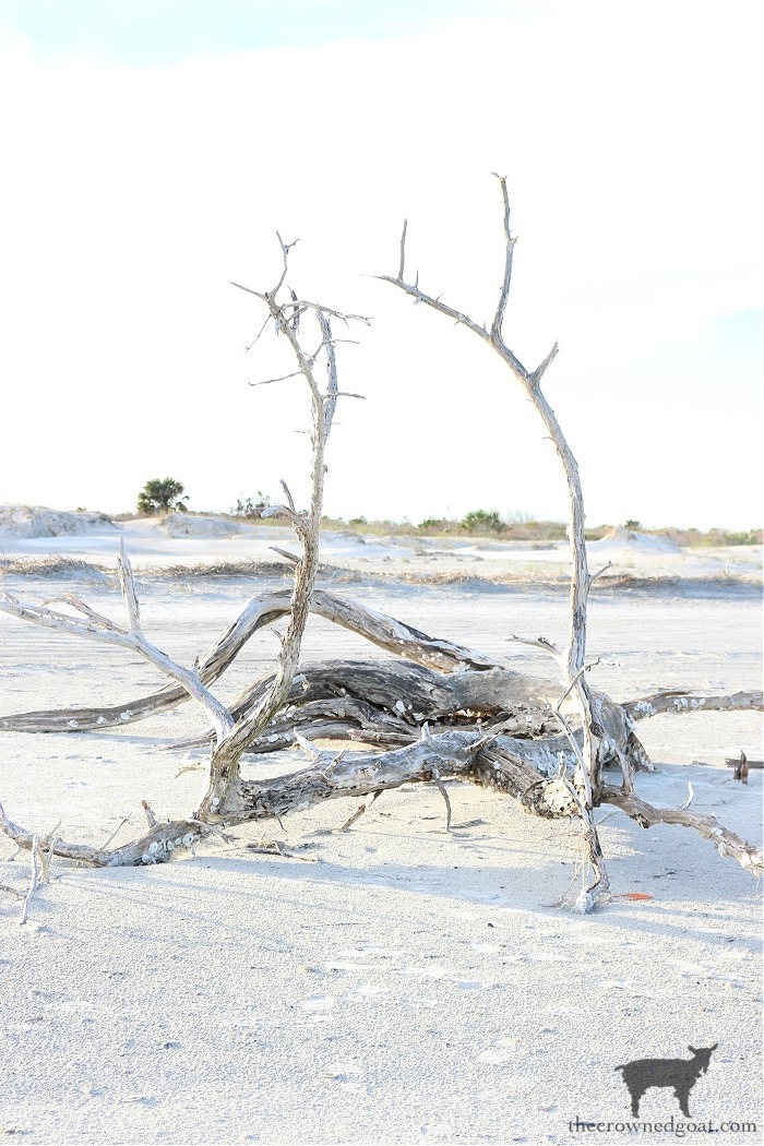 Slowing Down and Searching for Driftwood This Summer -  The Crowned Goat