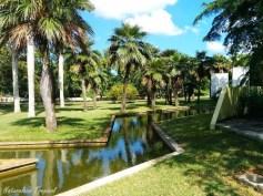palmetum-Jardin-Botanico-Nacional-de-Cuba