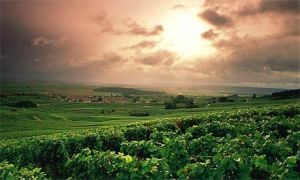 The Champagne region in France is beautiful.