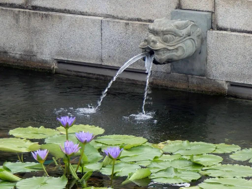 10 - Hong Kong - Chi Lin Nunnery - lotus pond