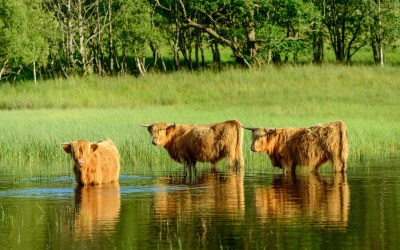 Best Places to Visit in Scotland: Balloch and Loch Lomond