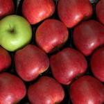 CultureFit.apples