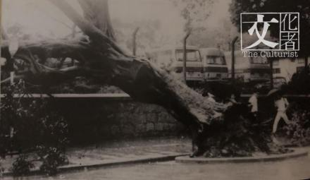 1971年八月,颱風露絲是香港「風史」上第二個掛八號波的強颱風,當時街上大樹被連根拔。