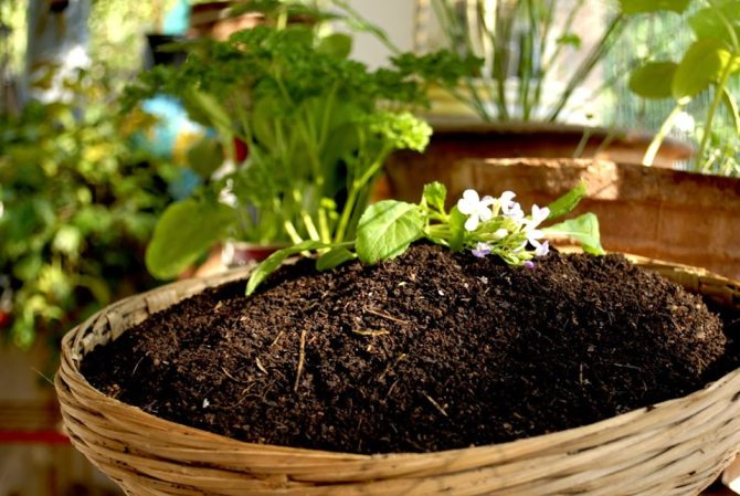 A pile of compost with some plants growing from it.