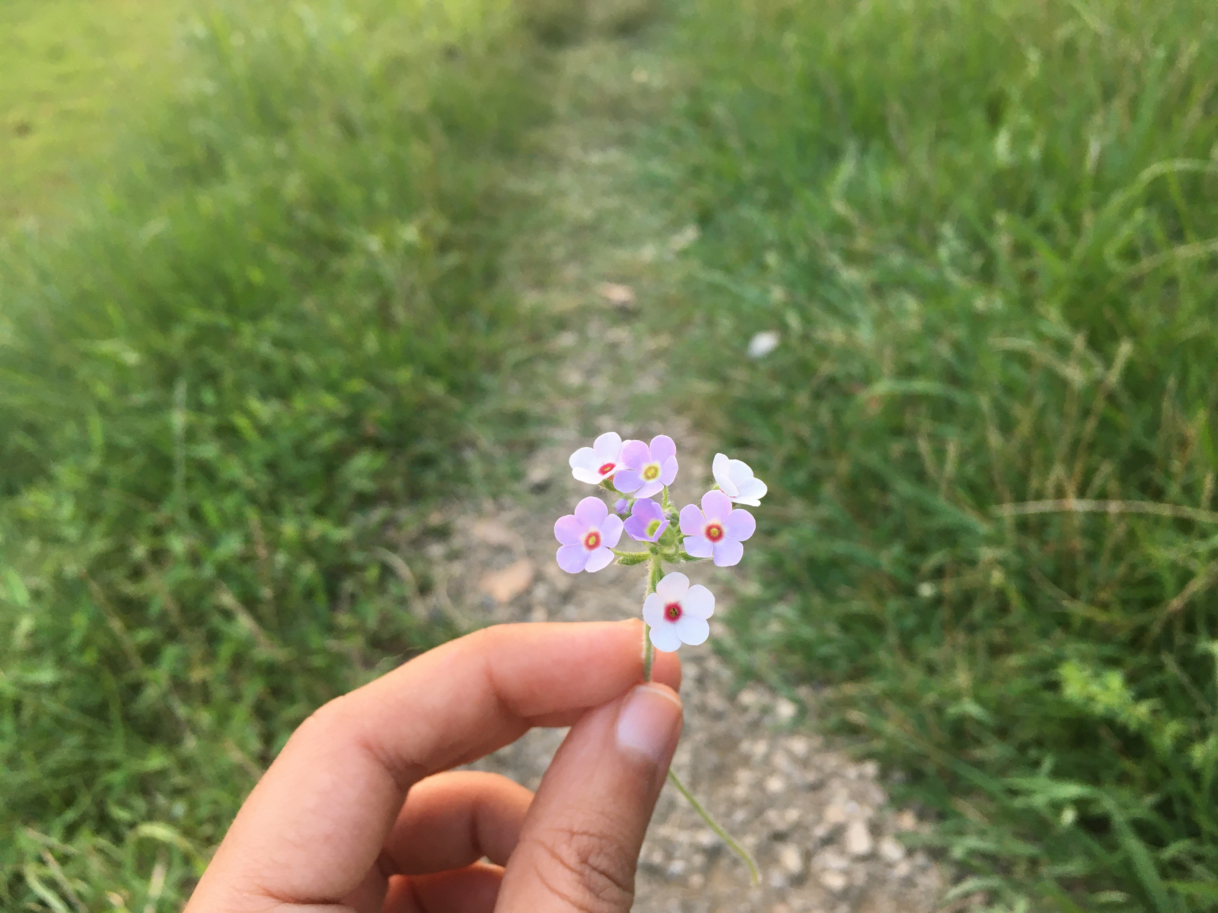 A hand holding a flower on a path - both sides of which is fully green