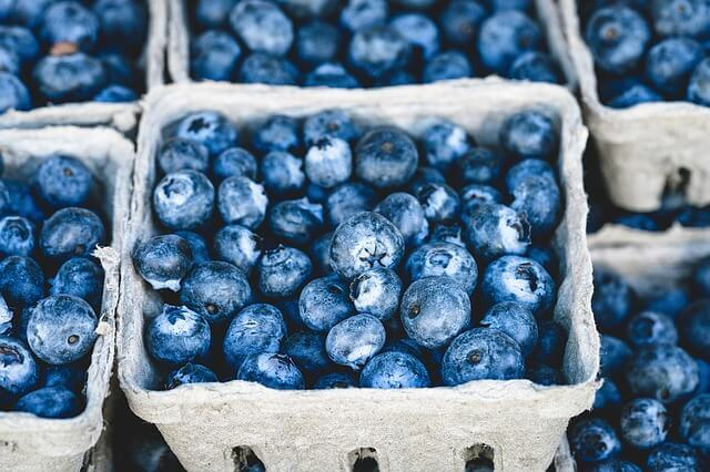 close up of cartons of picked blueberries
