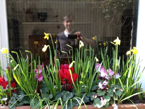 Daffs, cyclamen, muscari