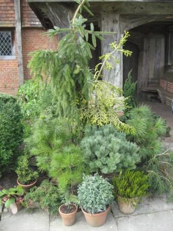 a-curious-gardener-great-dixter-IMG_0129a-curious-gardener-great-dixter