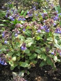 a-curious-gardener-great-dixter-IMG_0142