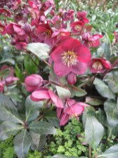 a-curious-gardener-great-dixter-IMG_0153