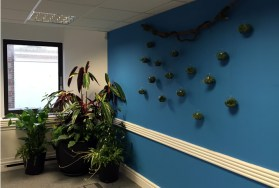Airplant Wall Hangings london