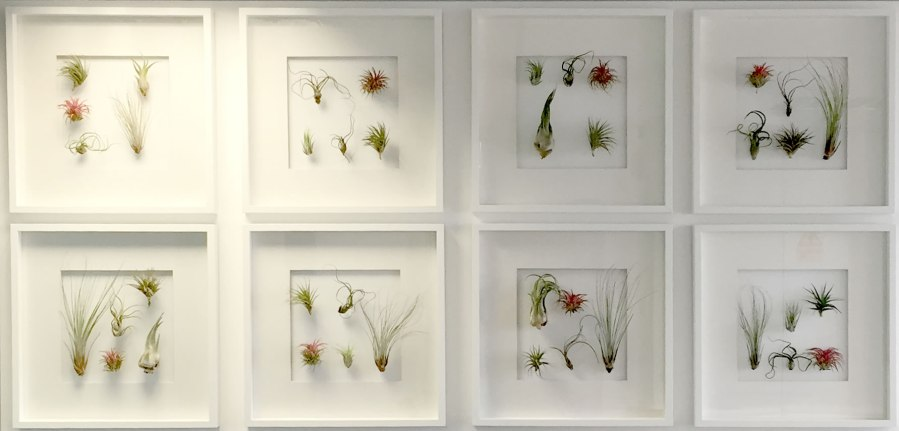 OST_phase1-reception-living-wall-plant-frames-office-london-curious ...