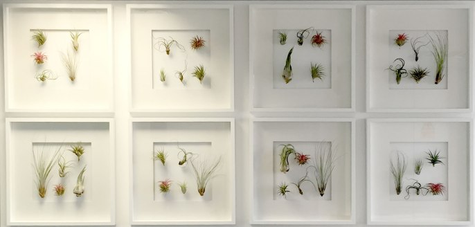 OST_phase1-reception-living-wall-plant-frames-office-london-curious-gardeneraaa
