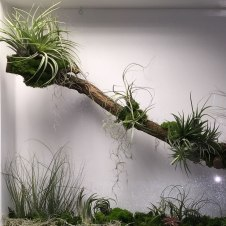 OST_phase2-reception-living-wall-plant-frames-office-london-curious-gardener-close