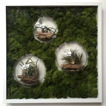 Living Bubble frames
