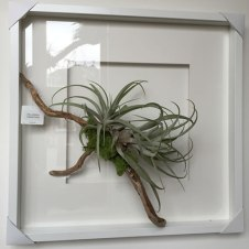 terrariums-london-greenwall-plant-office-houseplants-curious-gardener-close-3