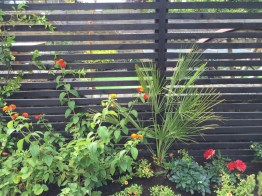 garden design crouch end london (14)