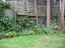 gardening in finsbury park london (9)