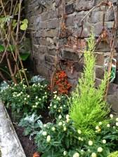 islington gardening services (5)