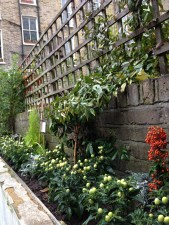 islington gardening services (6)
