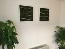 office plants in london - ost (2)