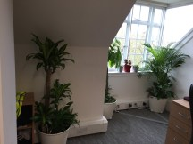 office plants in london - ost (7)