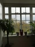 office plants in london - ost (8)
