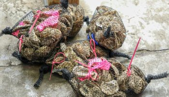 bagged oyster shells