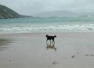 Dee - Keem Bay, Achill, 2007