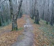 April 2013 - Knockbarron Woods - Millie in the woods