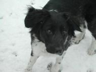 Dee - snow!